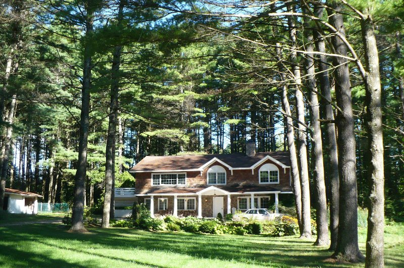 The view from the front lawn... over 200 pine trees surround the property