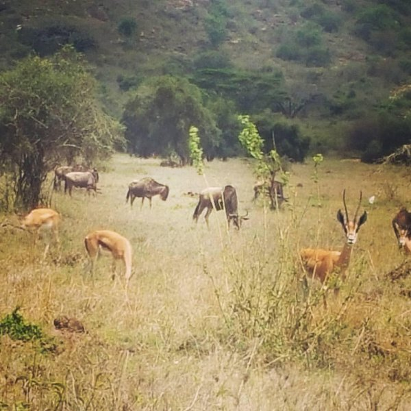 Early morning grazing wildlife on the 4km stretch from the main road to Isaac House