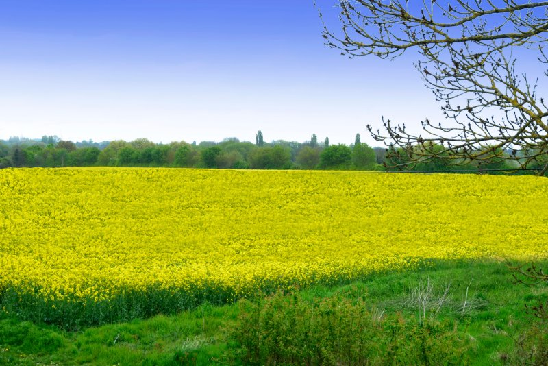 The view from the bedroom , just 1.5 miles from the city centre and surrounded by countryside
