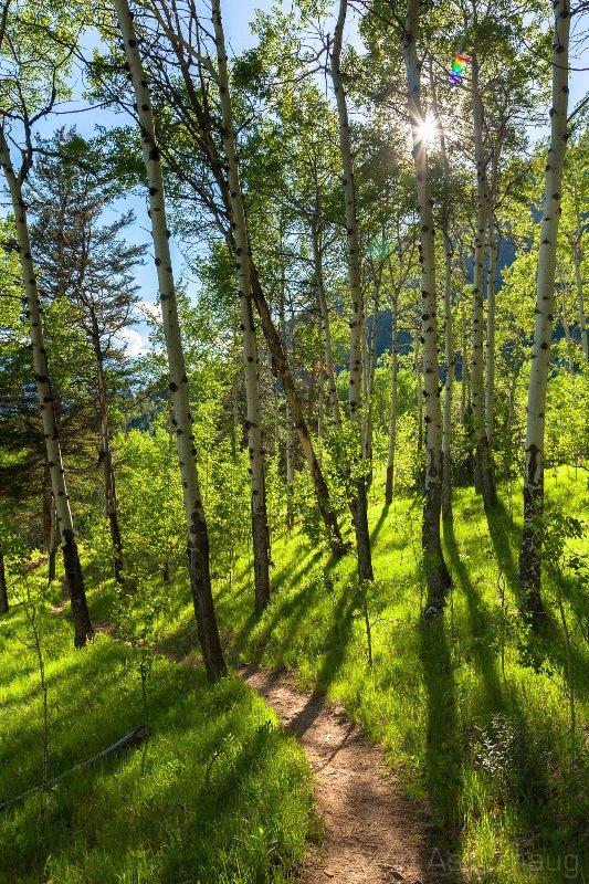 Vandringsled nära Banff