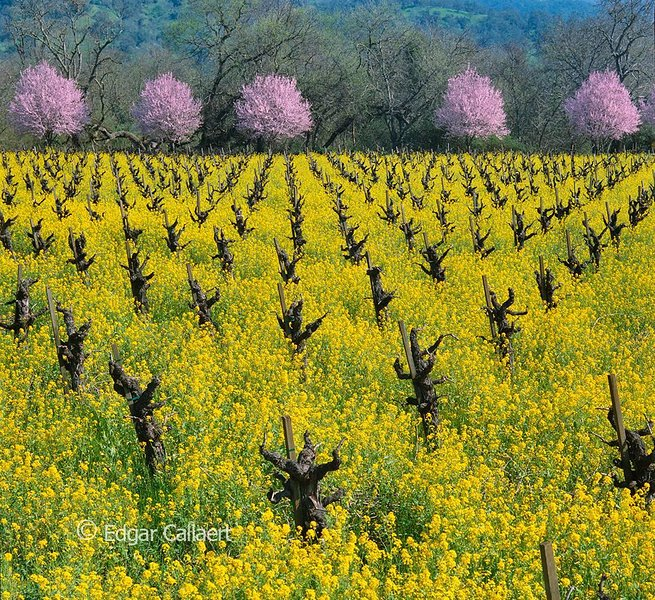 Napa is really all about the countryside. True refreshing beauty.