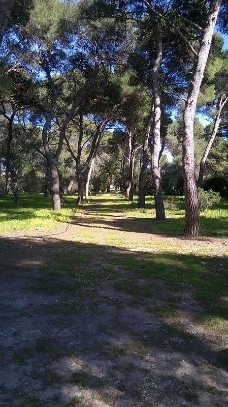 bosque de pinos en frente de la casa