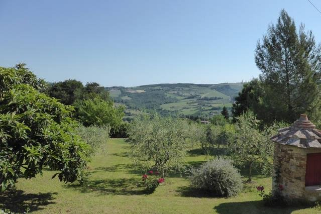 Extended garden with small olive grove