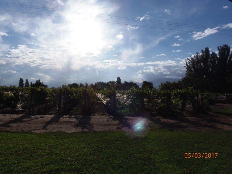 3 hectares vignoble Malbec
