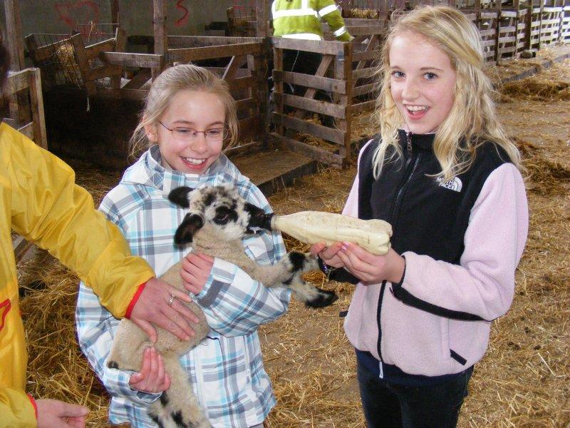 Lambing Março / Abril