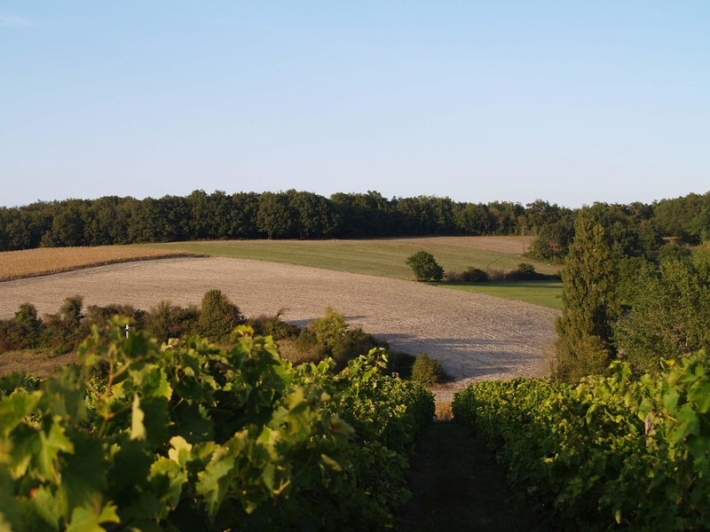 The local rolling countryside, from the vines