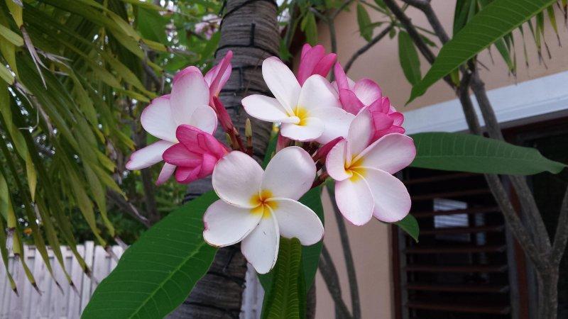 Flores adornan la propiedad.