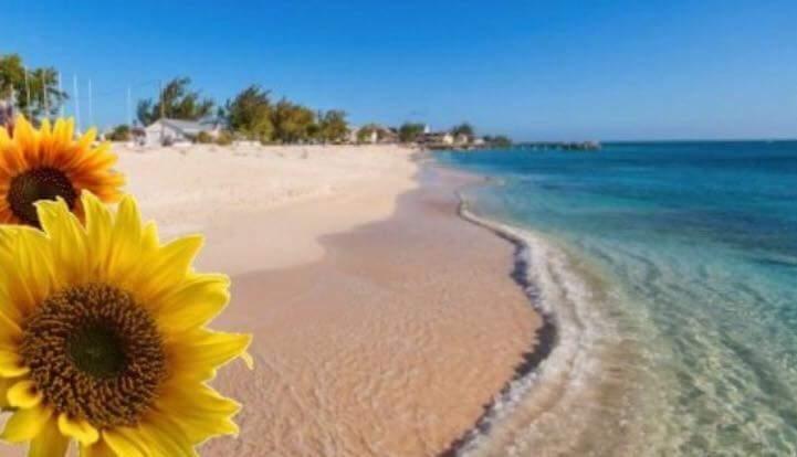 Sunflower Oasis vacation rental, Ferienwohnung in Grand Turk