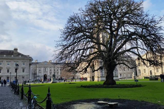 Trinity cour de collège est situé à deux minutes par l'entrée arrière