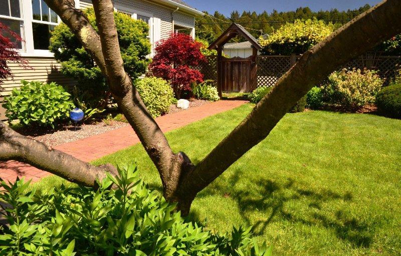 Alquiler de Arcata estadía Forest View Stay estudio de vacaciones precioso jardín