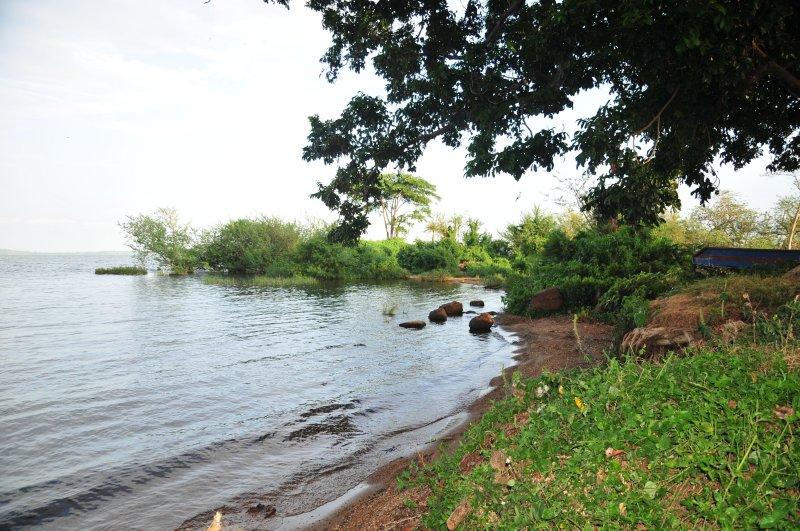 Disfrutar del hermoso paisaje del Lago Victoria.