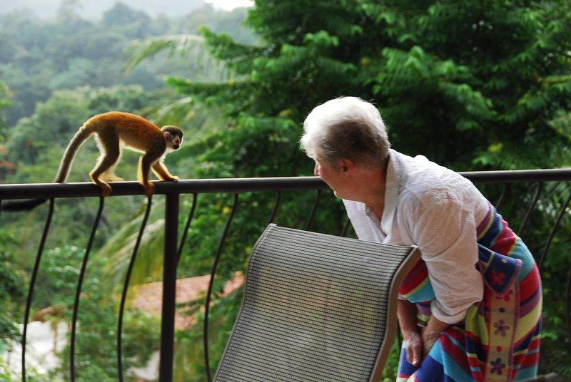 Wildlife visita CasaTolteca todos os dias