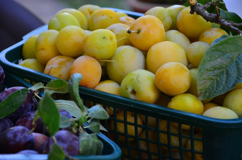 Love organic food?