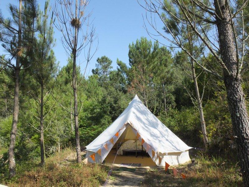 Tent Pine (2)