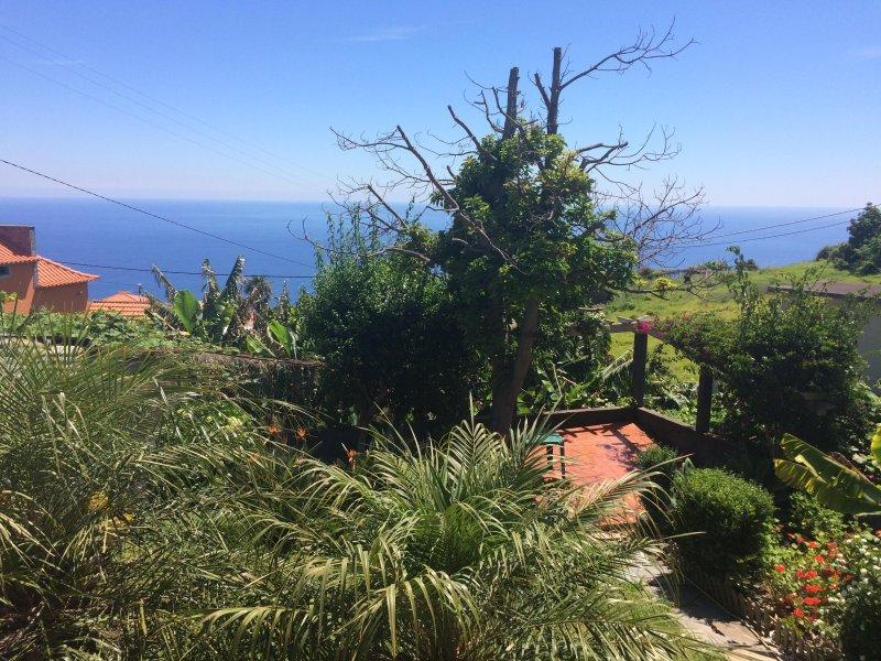 Con vistas a la exuberante jardín con muchas plantas y flores de Madeira típicos, incluyendo árboles de plátano