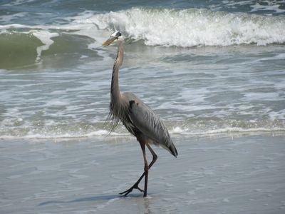 nuestra wildlfe locales ama la playa tanto como lo hacemos