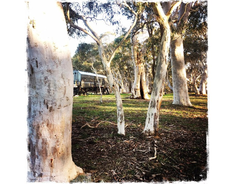 Carriage 343 is located adjacent to beautiful scribbly gums
