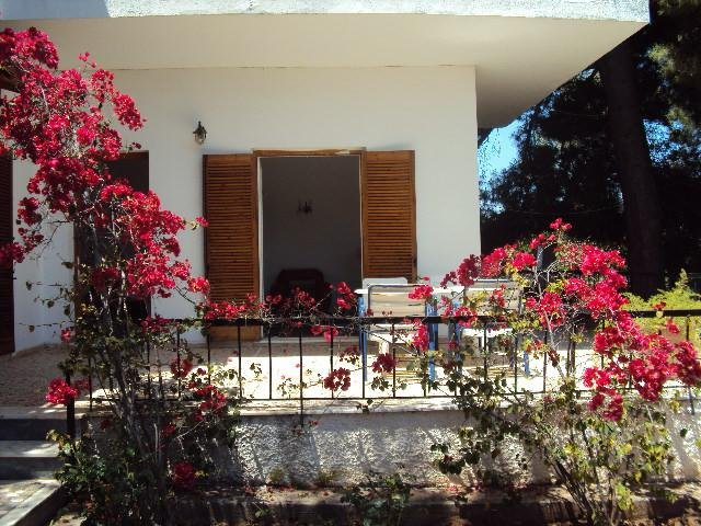 The livingroom's front verandah decorated by the bloomed bougainvilleas and pine trees at the back.