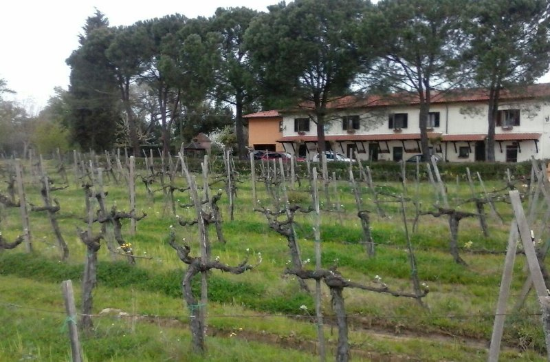 Agrivacanze monolocale il Blu, holiday rental in Cicogna