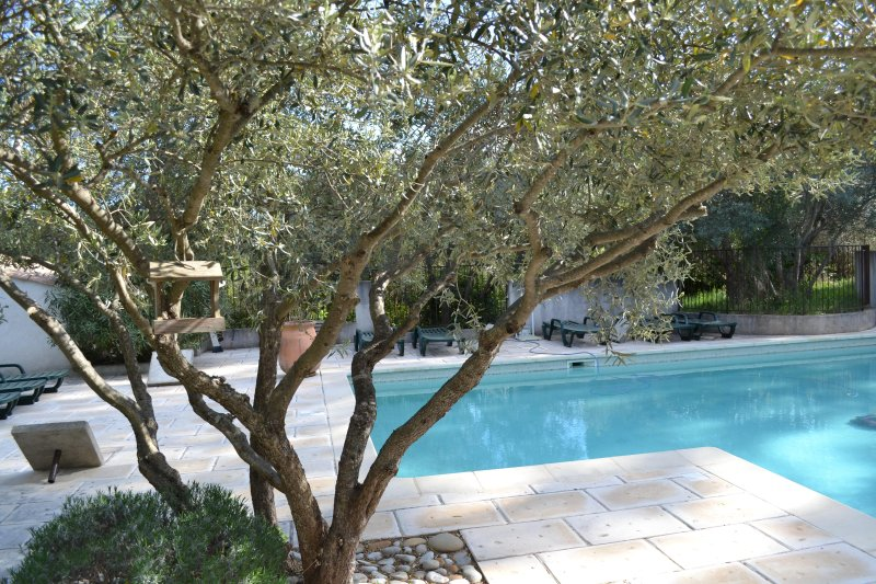 Outdoor pool with olive trees