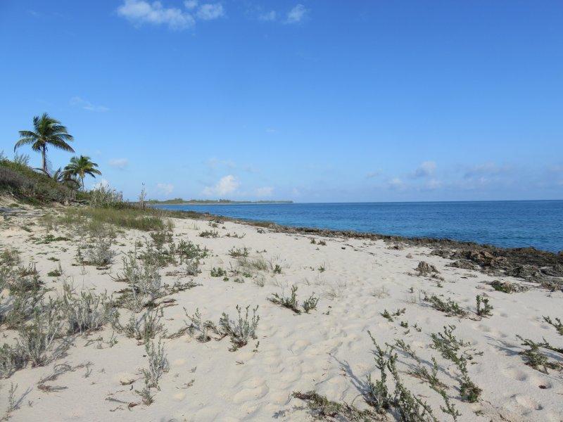 1 de 4 en una serie de la playa.