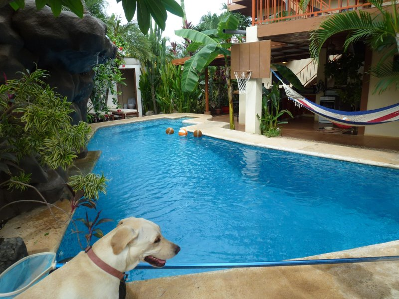 The pool at Casa Bambora
