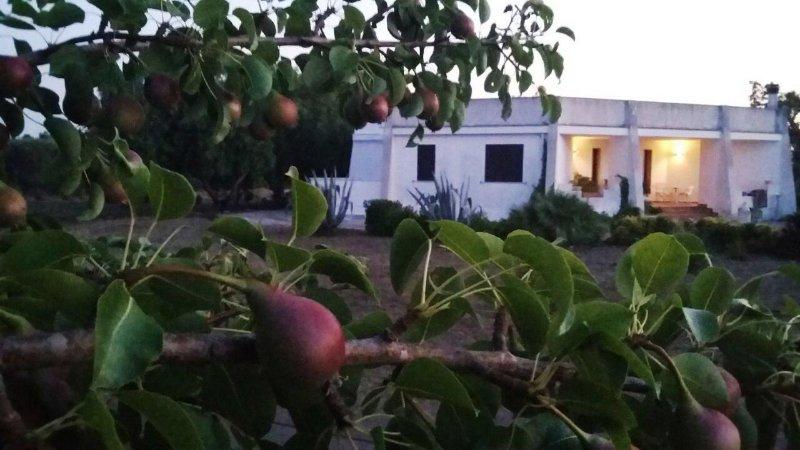 Vista dal giardino della casa vacanze in salento