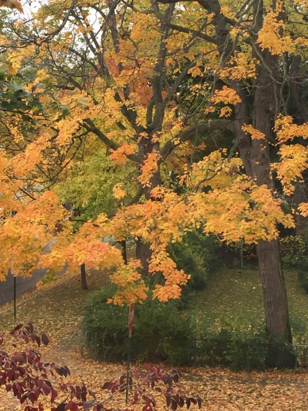 fall outside the upstairs window