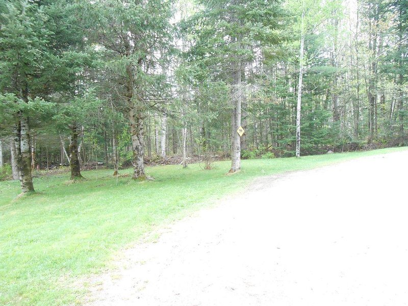 Large backyard that borders private wooded area
