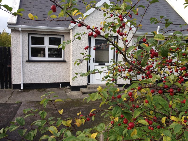 Bridget's Cottage, holiday rental in Dunfanaghy