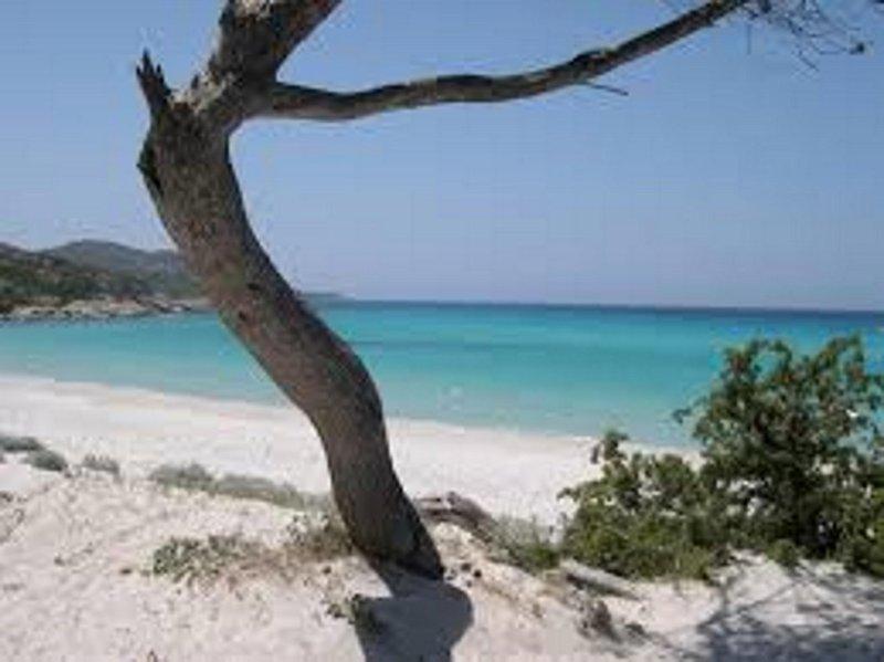 PETIT COIN DE PARADIS POUR VACANCES REUSSIEES PROCHE MER, MONTAGNE ET COMMODITEE, holiday rental in Canale-di-Verde