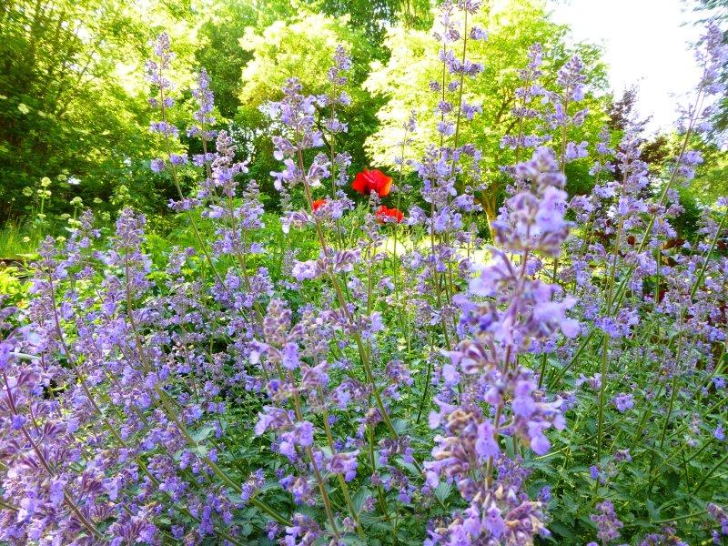 Hellbachhof - flowers in the garden