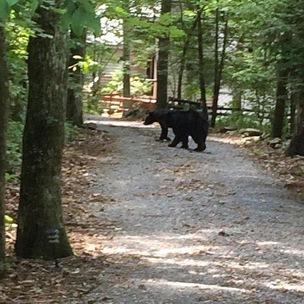 2 beren in de oprit