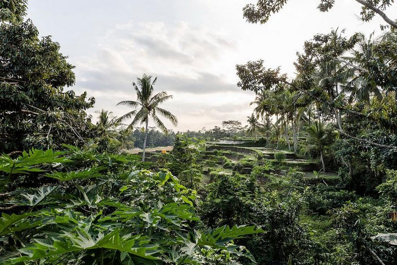 Main views of Villla Sekay Ubud from terrace , Jungle views and rice terrace , directly stunning.