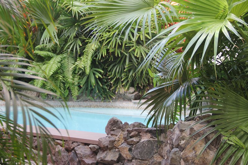 piscine tropicale commune. 3x6