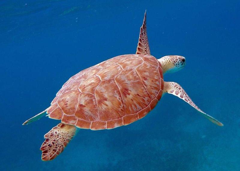 La tortuga verde amigable