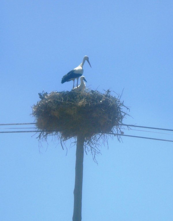 Meet the neighbours. Vale da Cegonha means valley of the stork