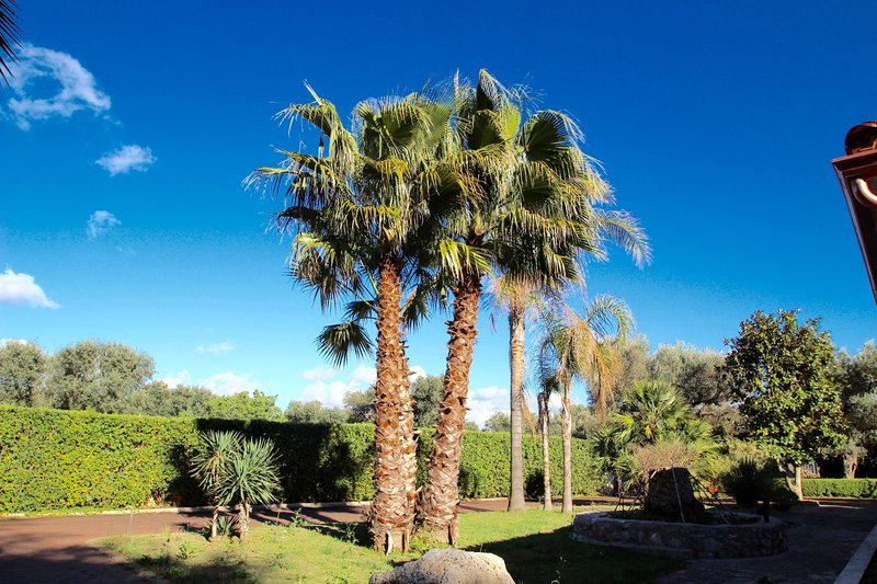 Palm trees in the gardens.