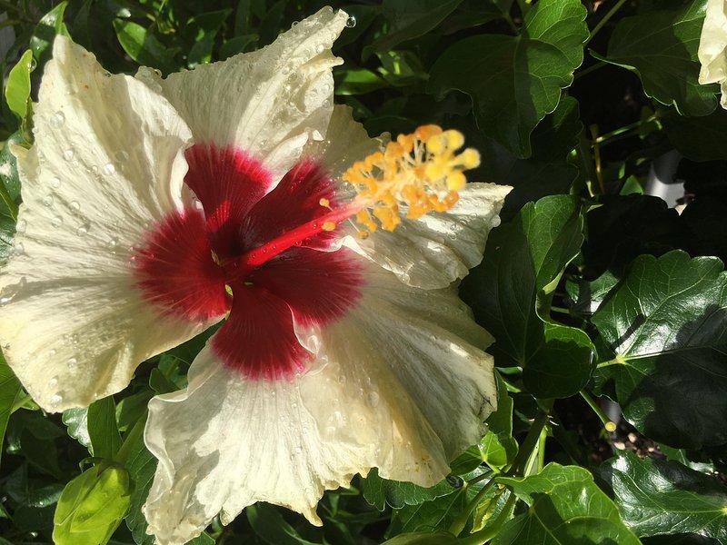 tropical garden plant
