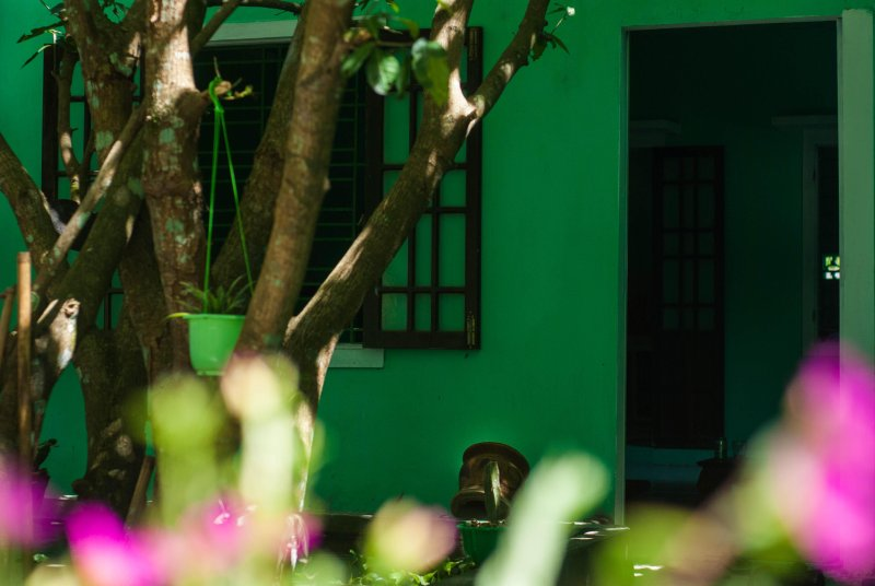 Green Field Homestay - A wonderful destination to stay and experience