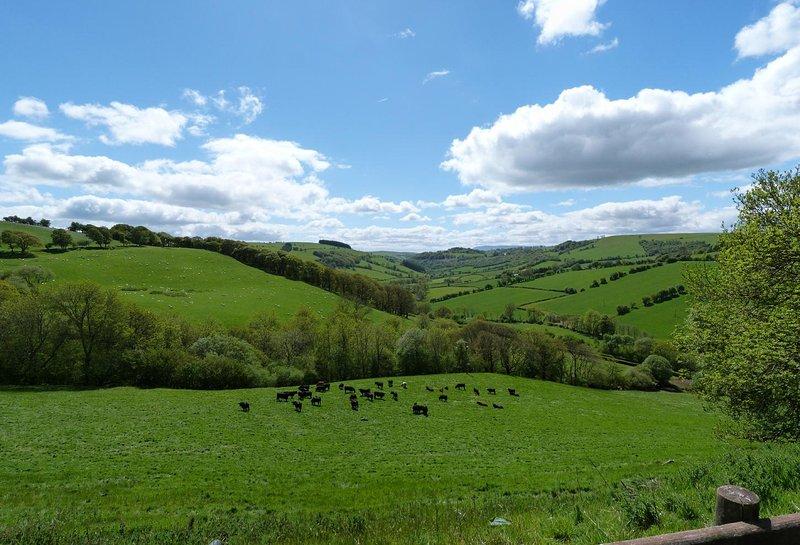 Surrounded by lush green countryside - Ysgubor y Mynydd: 358766, holiday rental in Llanwrtyd Wells