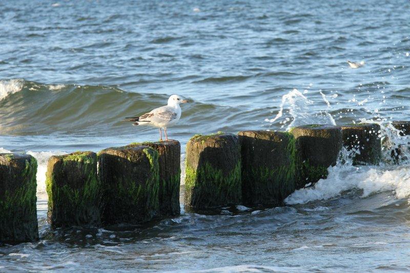 Die Ostsee vor Bansin