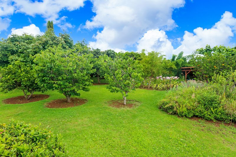 Private Home W/ Pool; Fruit Trees & Coastal