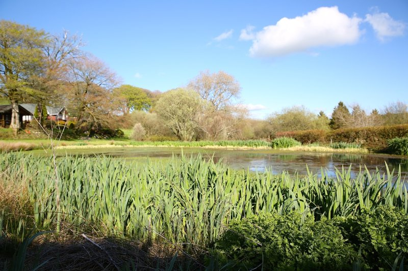 Top wildlife pond at Ta Mill