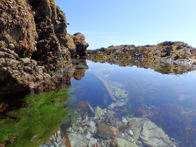 Rock pools at the west end of Seaton Beach.