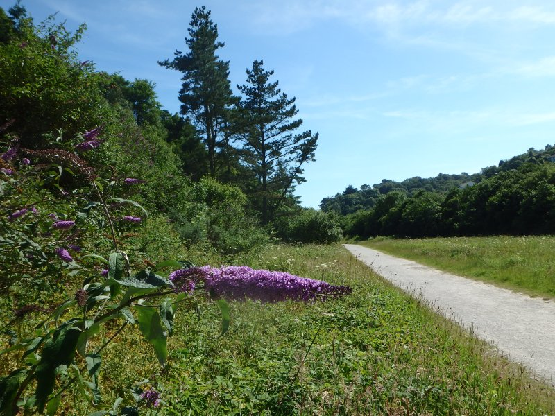 The walk through Seaton Valley Nature reserve to the beach.