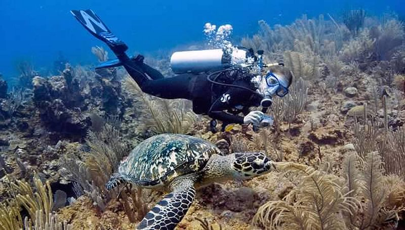 Dive with our onsite dive and tour shop