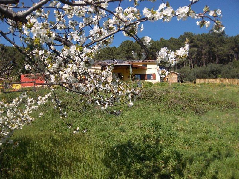 Casa Rural Las Gesillas en la Sierra de Gredos, location de vacances à Mombeltran