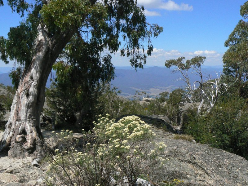 Drive to nearby Mt Buffalo-fresh air, magnificent walking trails, fantastic views.