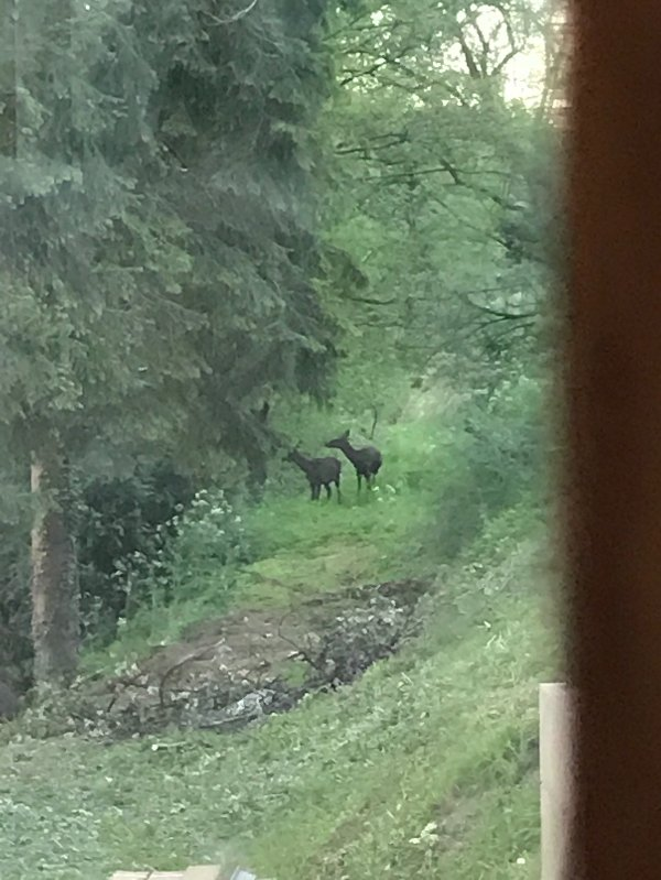 Deer, picture taken from the kitchen